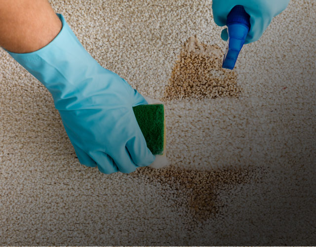 Carpet Cleaning & Maintenance